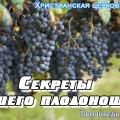 Секреты хорошего плодоношения